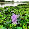 Flor de Bora.png