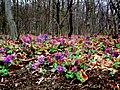 Flora 17 Slovakia3.jpg