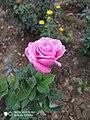 Flower 58.jpg