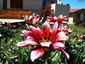 Flower hi.jpg