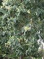 Flower tree-malli.jpg