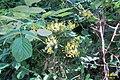 Flowers (31270622143).jpg