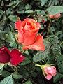 Flowers - Uncategorised Garden plants 118.JPG