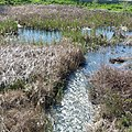 Folsom Marsh near E. Bidwell - panoramio.jpg