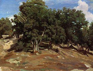 Fontainebleau: Oak Trees at Bas-Bréau