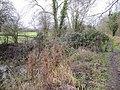 Footbridge covered in ivy - geograph.org.uk - 1639620.jpg