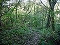 Footpath in Hawthorn Dene - geograph.org.uk - 1541207.jpg