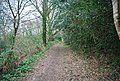 Footpath to Forest Rd - geograph.org.uk - 1273427.jpg