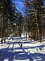 Forest Walk In Winter - panoramio.jpg