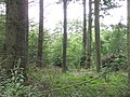 Forest Wood - geograph.org.uk - 909888.jpg