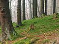 Forest in the Sauerland (3320361404).jpg