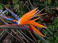 Formulax unknown flower2.JPG