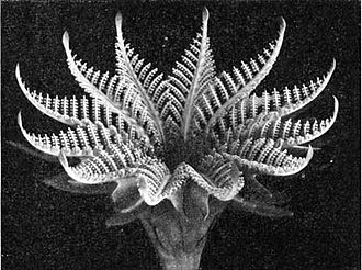 Fossil Cycad National Monument - A reconstructed fossil cycad