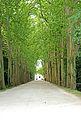 France-001520 - Château de Chenonceau Driveway (15474387071).jpg