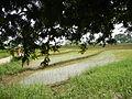 FvfPinagkuartelan,Pandi1432 11.JPG