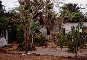 Gambia 066 from KG.jpg