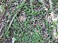 Gardenology.org-IMG 0610 rbgs10dec.jpg