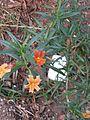 Gardenology.org-IMG 2711 ucla09.jpg
