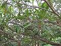 Gardenology.org-IMG 7115 qsbg11mar.jpg