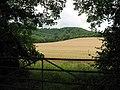 Gateway to wheat field - geograph.org.uk - 1407699.jpg