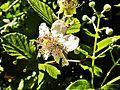 Gavazzoli-fiore con insetto.jpg