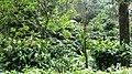 Gavi Forest - panoramio (2).jpg