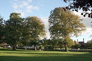 Geashill - The triangular green in Geashill