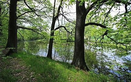 Geschützter Landschaftsbestandteil Schubertgrund in Sachsen.2H1A1383WI.jpg