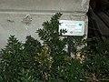 Giardino botanico di Brera (Milan) 177.jpg
