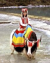 Girl On Yak In Yunnan Province, China