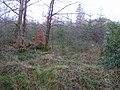 Glenfarne Forest - geograph.org.uk - 1118182.jpg