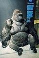 Gorilla (32180434172).jpg
