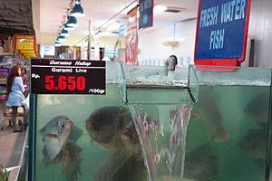 Giant gourami - Live fresh gourami for sale in a supermarket in Jakarta