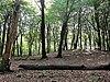 grafheuvel1 nabij solsche gat