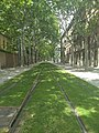 Grassy tram tracks in Barcelona.jpg