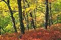 Gravel Family Nature Preserve (5) (30259970562).jpg