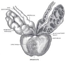 classification tnm du cancer de la prostate pdf