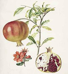 cover of Traite des arbres fruitiers from Wikimedia commons