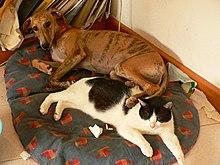 Dog Adoption Agencies Rochester Ny