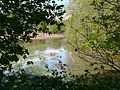 Grolet inondation champ amont pont D3.JPG