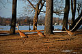Grus canadensis -near Wamplers Lake, Springville, Michigan, USA -three-8 (1).jpg