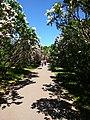 Gryshko botanical garden (May 2018) 09.jpg