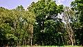 Hässeler Weiher von Neuenhaßlau - Am Waldrand.jpg