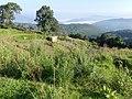 Habitat for West Himalayan Bush Warbler (36879445614).jpg