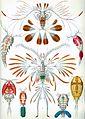 Haeckel Copepoda.jpg