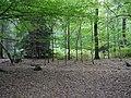 Hambach forest 09.jpg