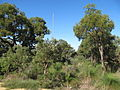 Hamersley tower reserve 3.jpg