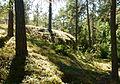 Hansta naturreservat Lindgrens berg 2013a.jpg