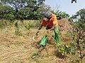 Harvesting Fonio.jpg