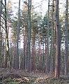 Hawkshaw Gill Wood - geograph.org.uk - 651777.jpg